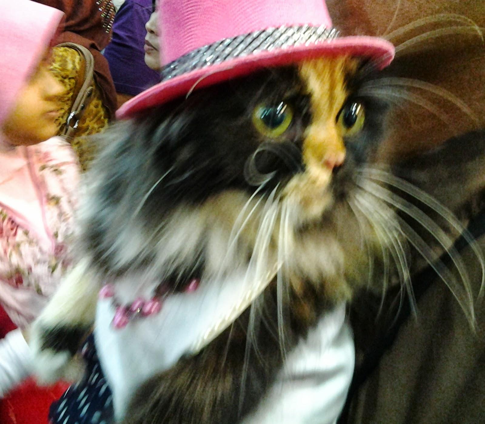 Warna Nostalgia Pameran Kucing Cantik