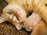 Cara Merawat Kucing Hamil Yang Baik