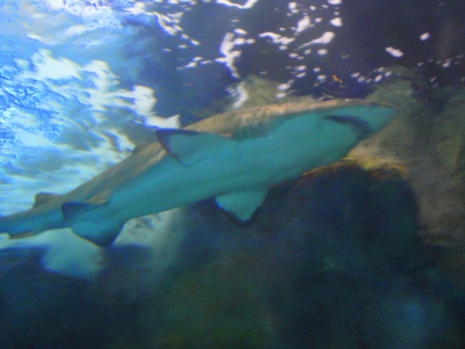 Direct Insights Travel Reviews By Reserve Direct Ripley 39 S Aquarium Is A Must Sea In Myrtle