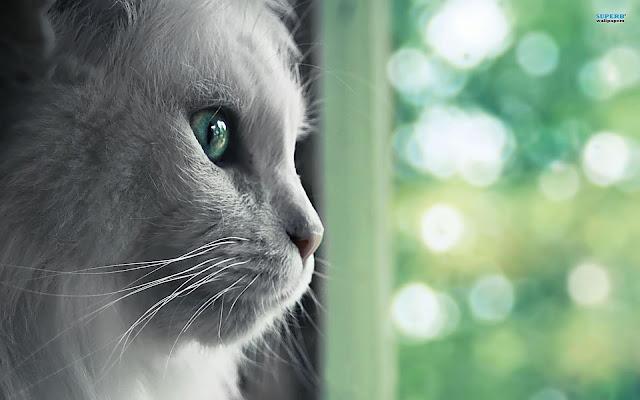 Cute Pussy Cat 33