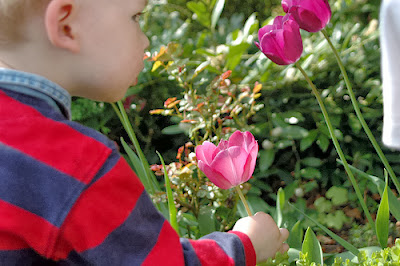 niño rosa