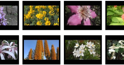 Flores%2b3