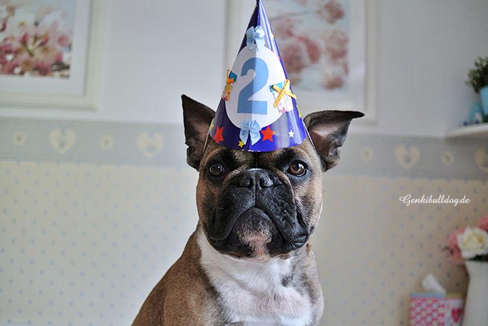 Genkibulldog Geburtstag