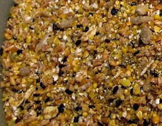 makanan bebek entok dari siput