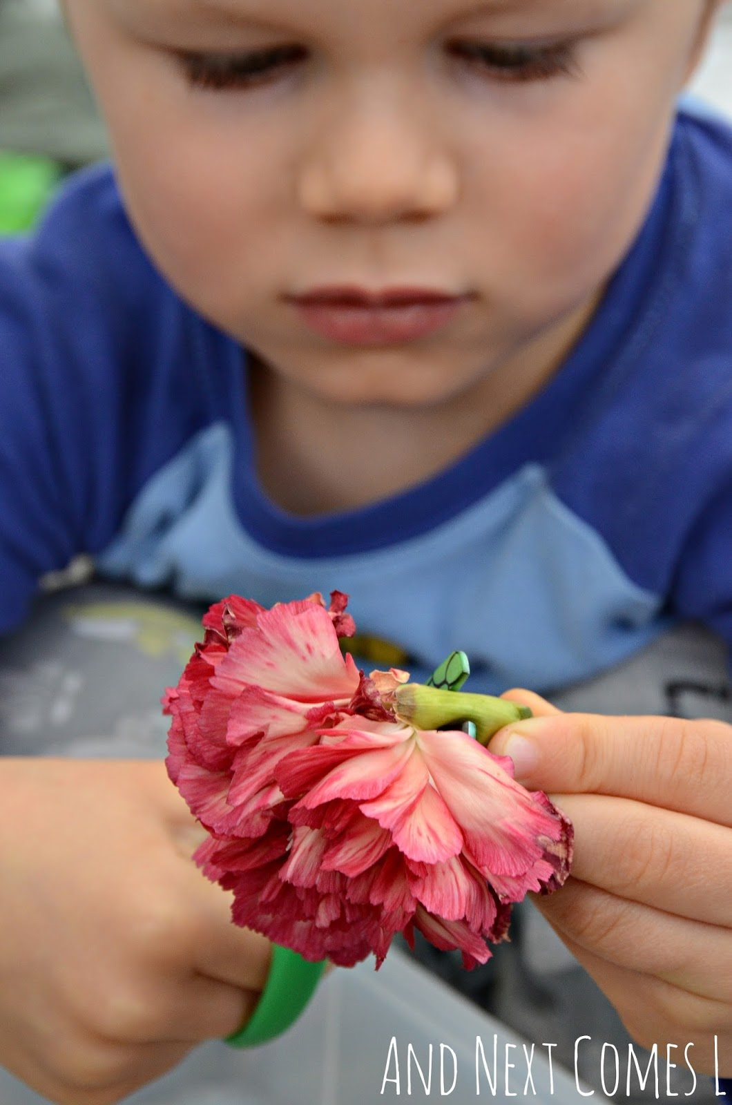 Fine motor scissor practice for toddlers and preschoolers using wilted flowers from And Next Comes L