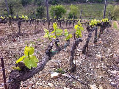 Imagen-Toscana-Viña