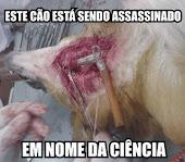 Este cão está sendo assassinado. Em nome da ciência!!!