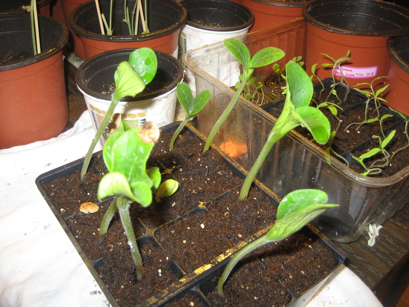 Gardening in zone 5a - Vegetable garden zone 5a ...