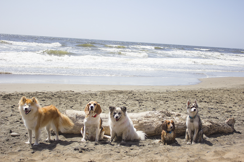 Dogs at California Coast