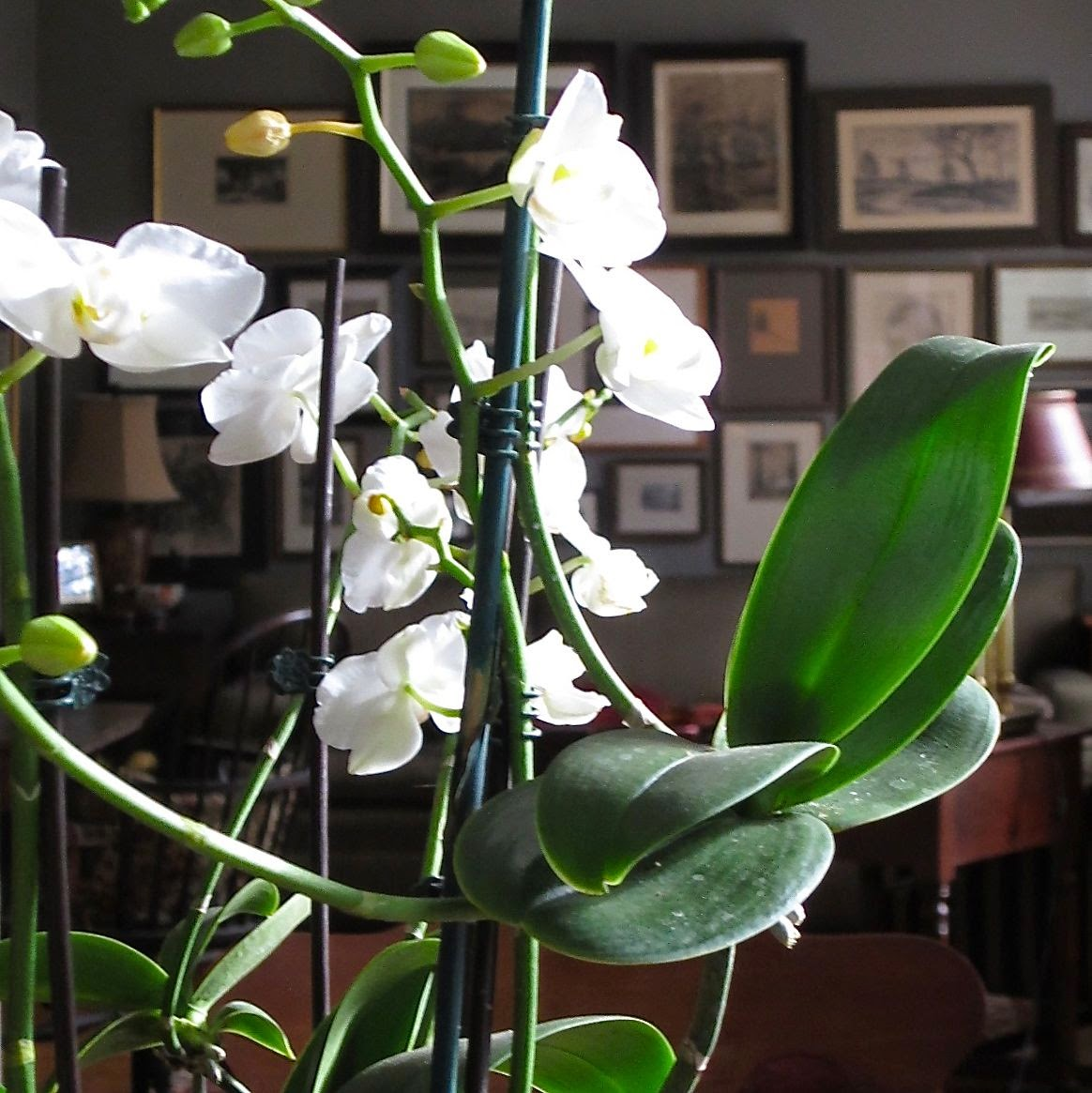 orchid on table
