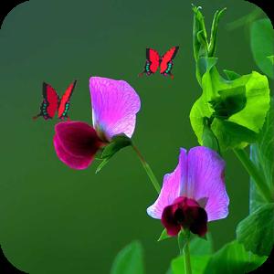 အစိမ္းေရာင္ ရူခင္း ေအျမေသာရူးခင္းအလွေတြနဲ႔-Green Live Wallpaper v1.5 Apk