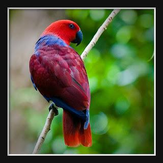 Tropical Colors Parrot: cutestanimols.blogspot.com/#!