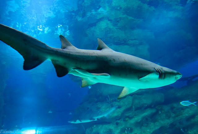 Путешествия: Москвариум акулы фото