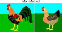 Mo-mottled.jpg