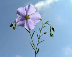 Kwiat Lnu