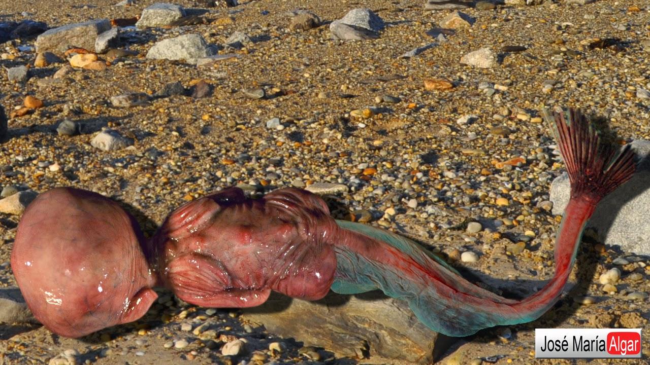 Sirenas reales encontradas vivas 1