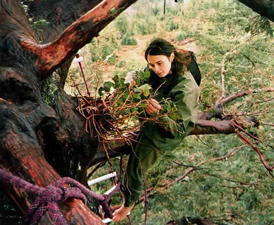 Julia Hill, the Remarkable Woman Who Saved a Tree by Living in It for Two Years