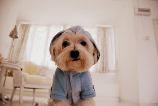 Legenda para fotos de cachorro - Imagui