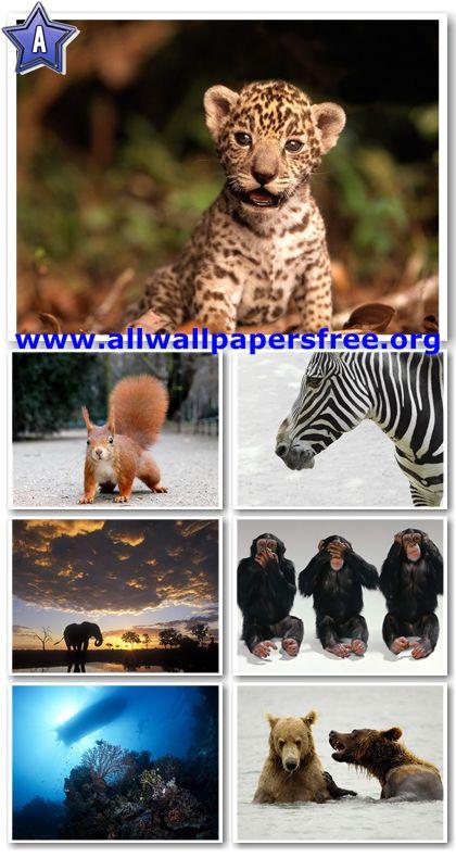 60 Amazing Animals Wallpapers 1280 X 1024 [Set 7]