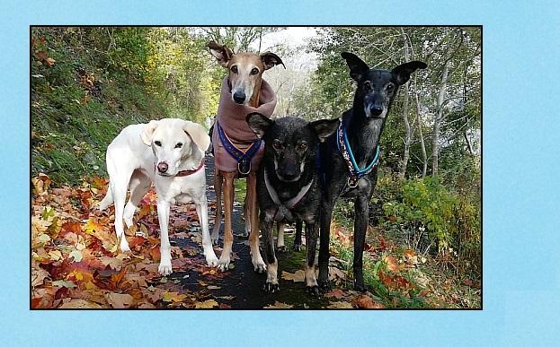 Aus dem Leben eines bunt gemischten Ohrenhund-Quartetts!