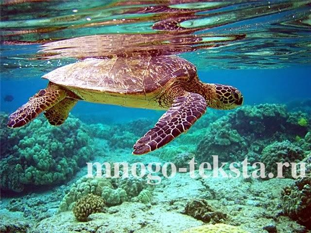 Особенности черепах, Мир черепах, Самая быстрая черепаха