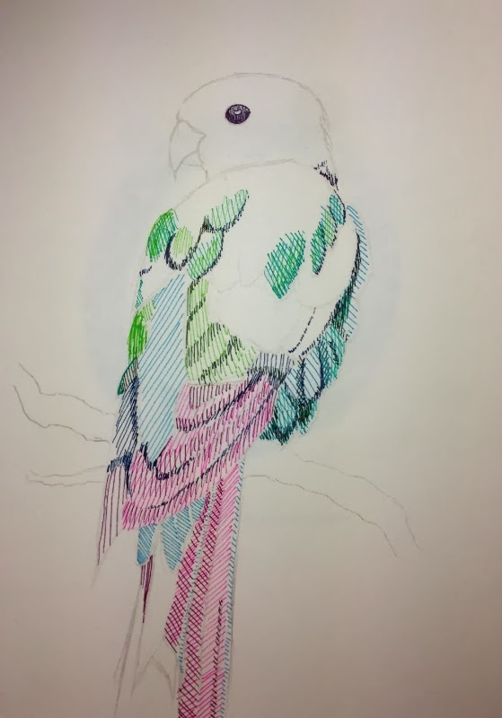 Colourful parrot in pen and ink. Work in progress by Stephanie Jennifer