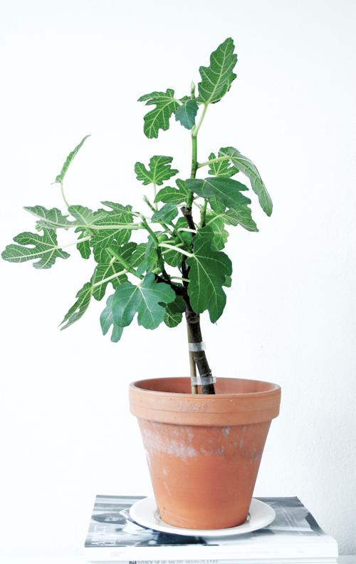 Plantes vertes anna g for Plantes vertes