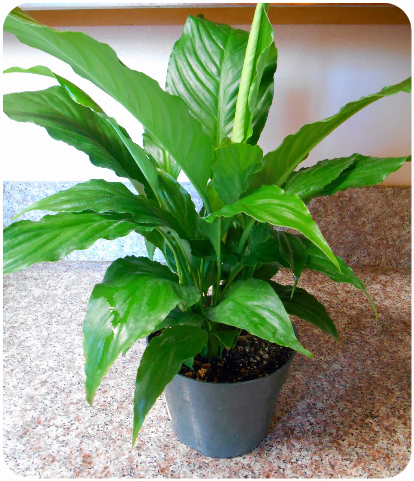 Maria sself chekmarev four ways to purify indoor air for Buy air purifying plants