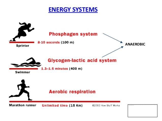 volleyball energy systems used Revisiting energy systems by jessica smith, me on may 01, 2002 for an example of how the different energy systems are used during indoor cycling, see general energy utilization during an indoor cycling class on page 50 interval training.