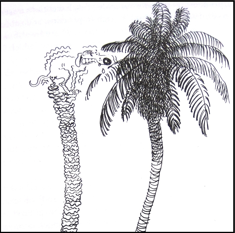 talking plants coconut palm just like a w coconut palm just like a w