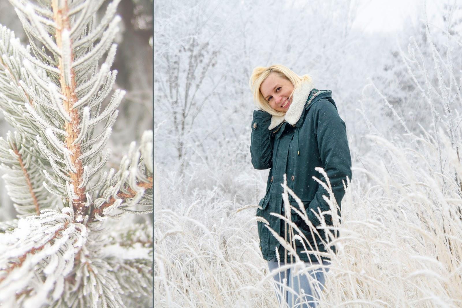 иней, лес, снег, мороз, чистый воздух,