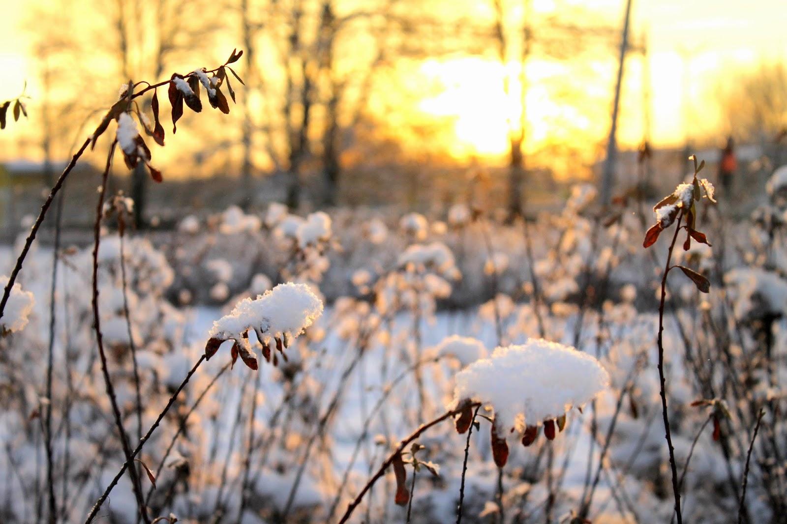 зима, снег, петергоф,