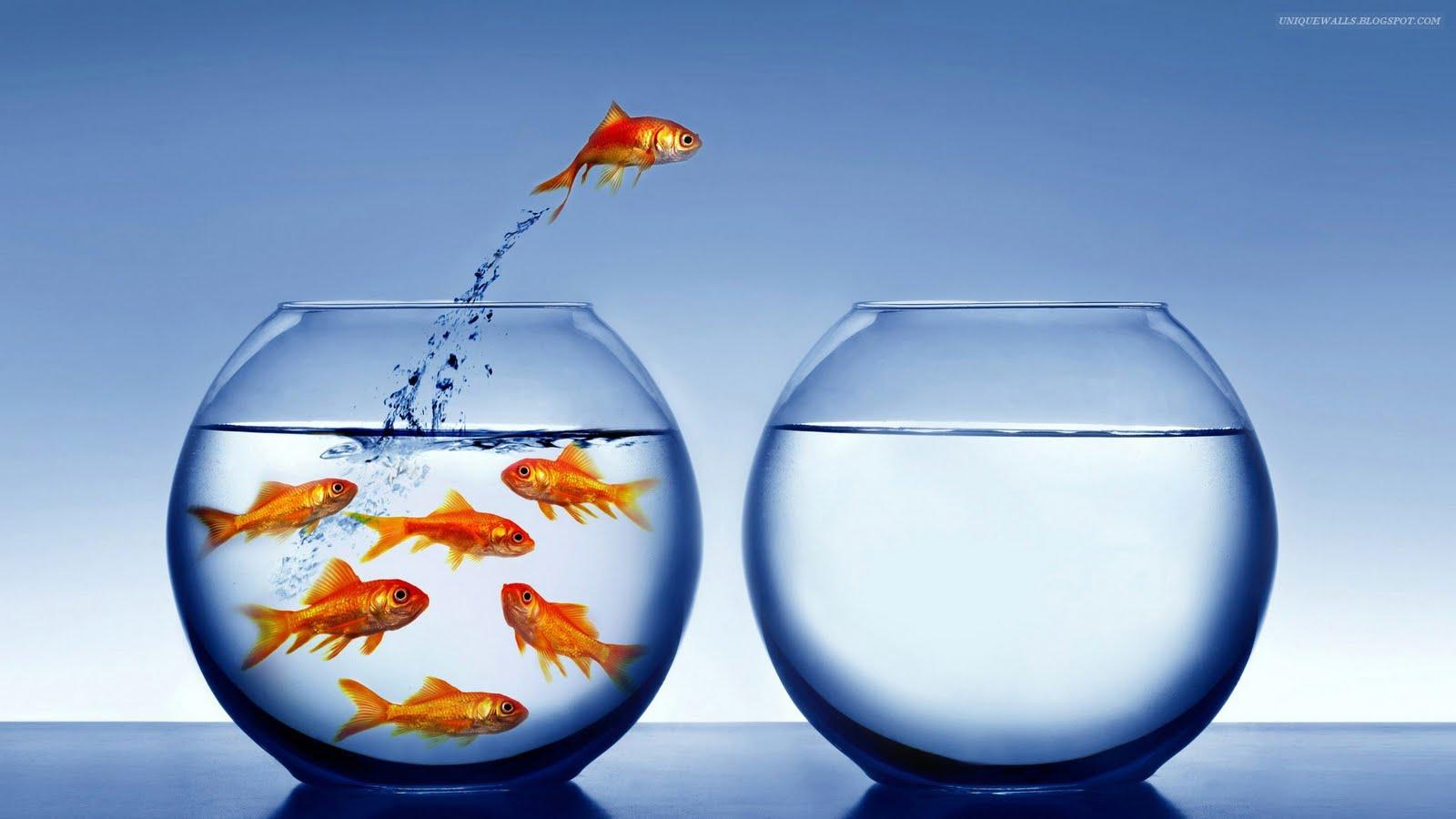 http://1.bp.blogspot.com/-5JXo5dKxFL8/S-UCobgezqI/AAAAAAAAAHU/J0g8rsj6cjs/s1600/goldfish_escaping_captivity.jpg