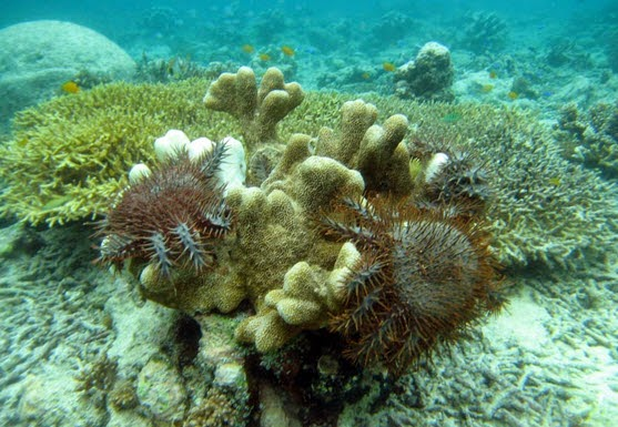 Mengenal apa terumbu karang itu