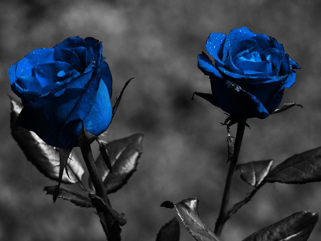 Flower Photos: January 2012