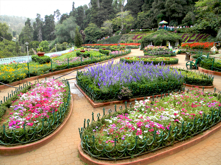 116th Ooty Flower Show News