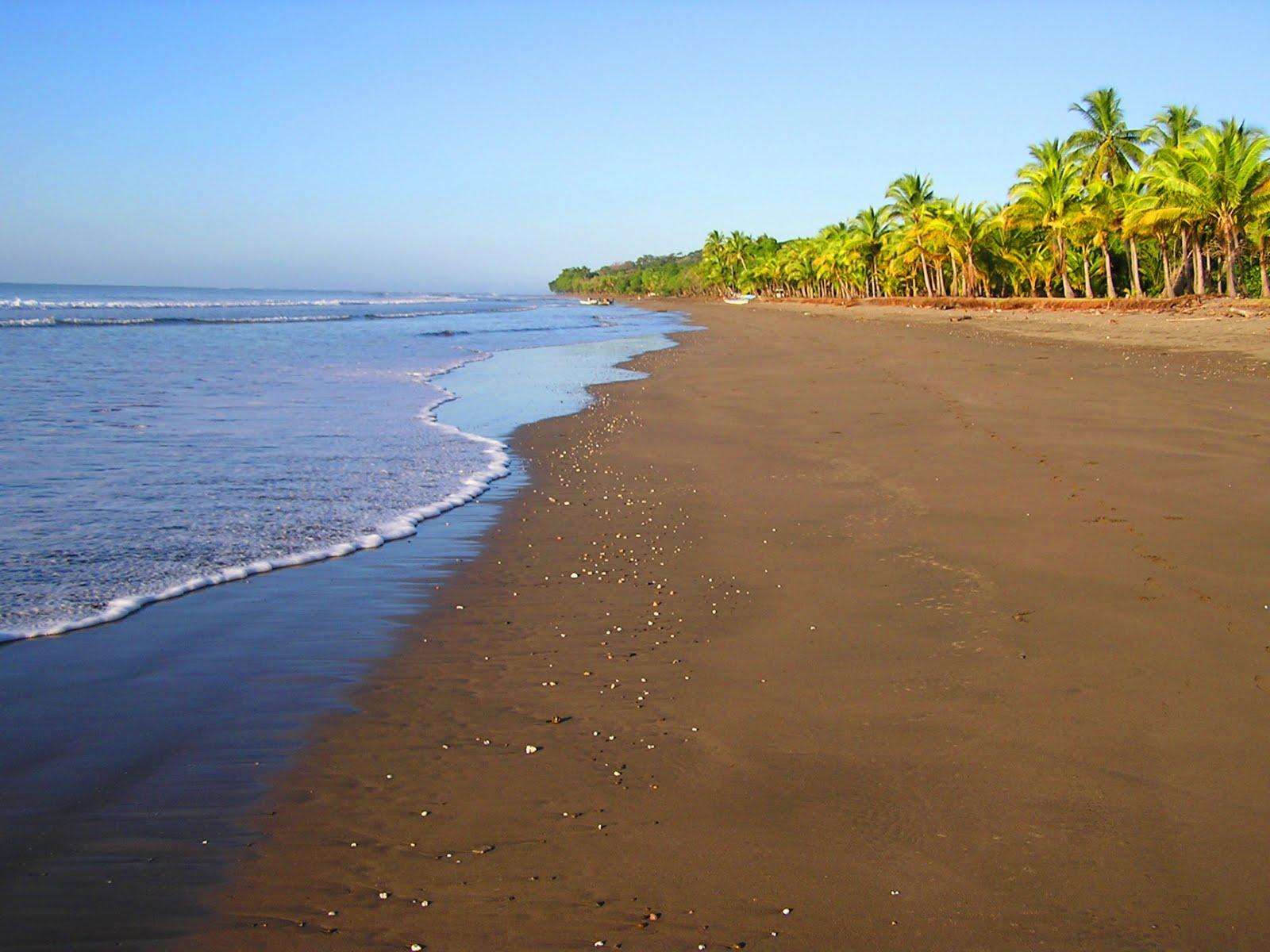 beautiful beach palms 1920x1440 Wallpaper nature free beautiful