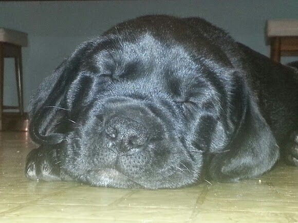 black puppy sleeping on floor