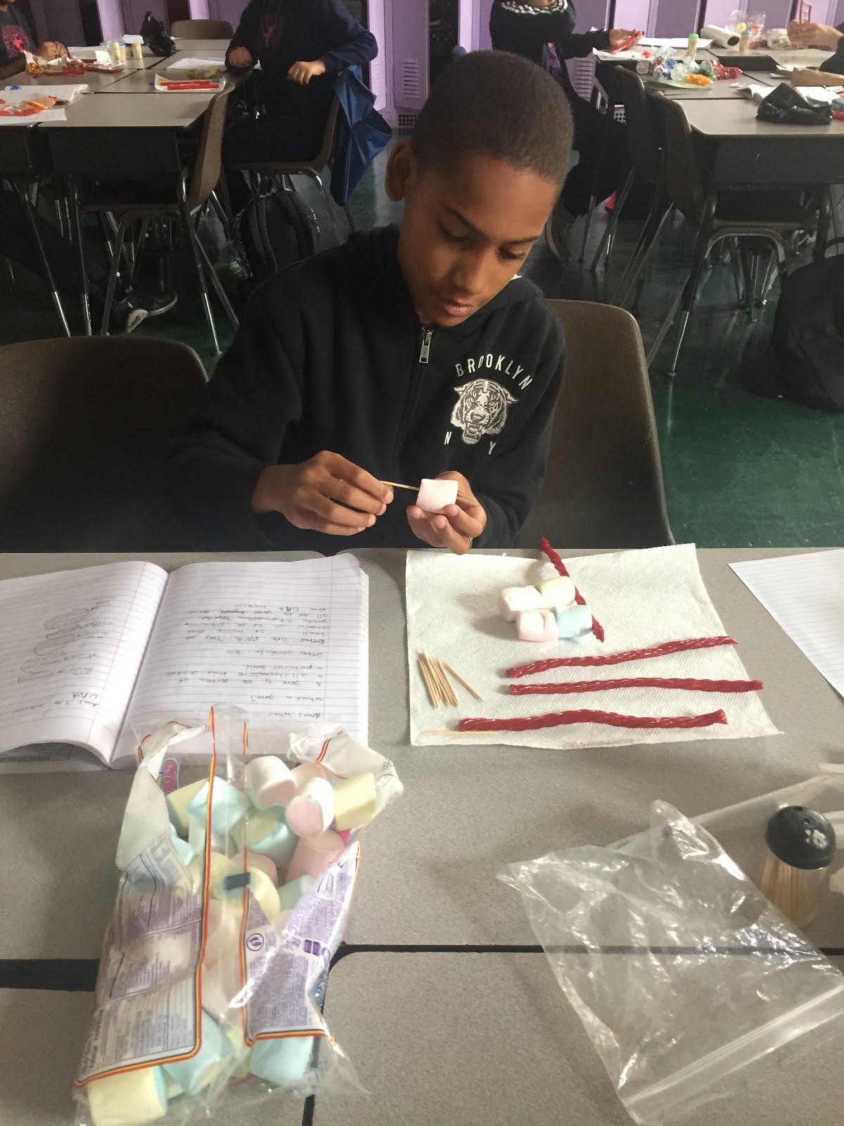 6th grade / DNA MODELS