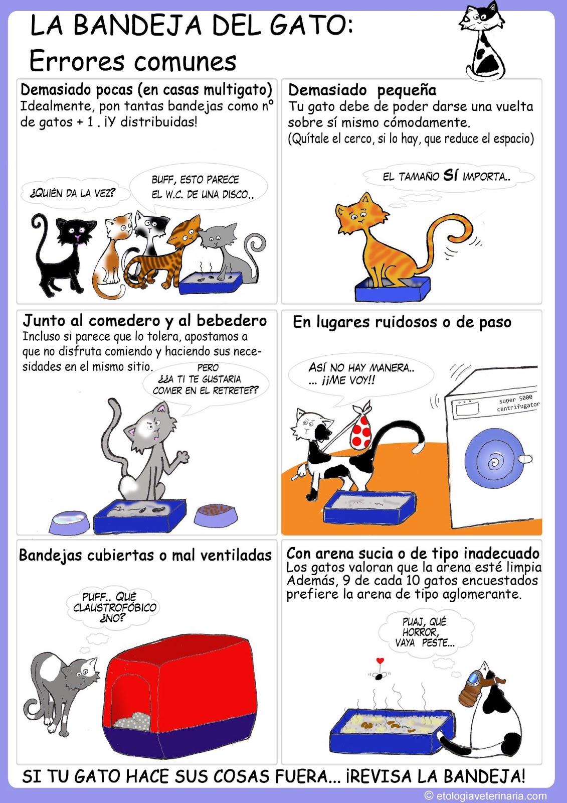 Mis gatitos recomendaciones para la convivencia con nuestras mascotas - Cuidados gato 1 mes ...