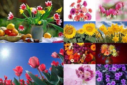 Flores para todas las mujeres del mundo I