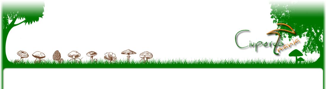 Ciupercomania, totul, cu si despre ciuperci