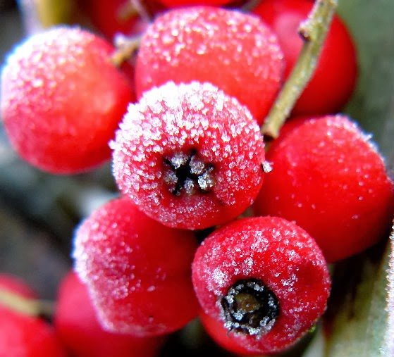 Frosty Berries