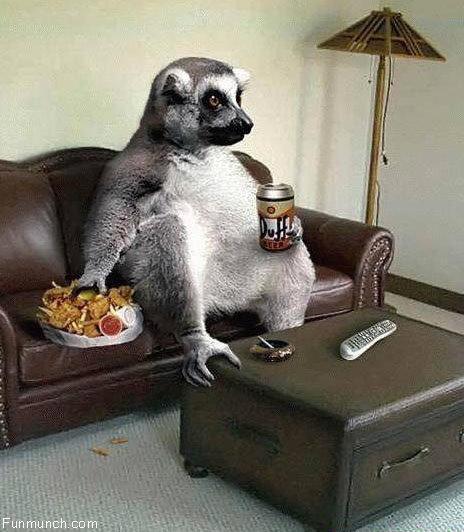 Funny Animals Watching TV