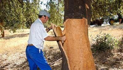 Windrose tapones de corcho naturalmente - Propiedades del corcho ...