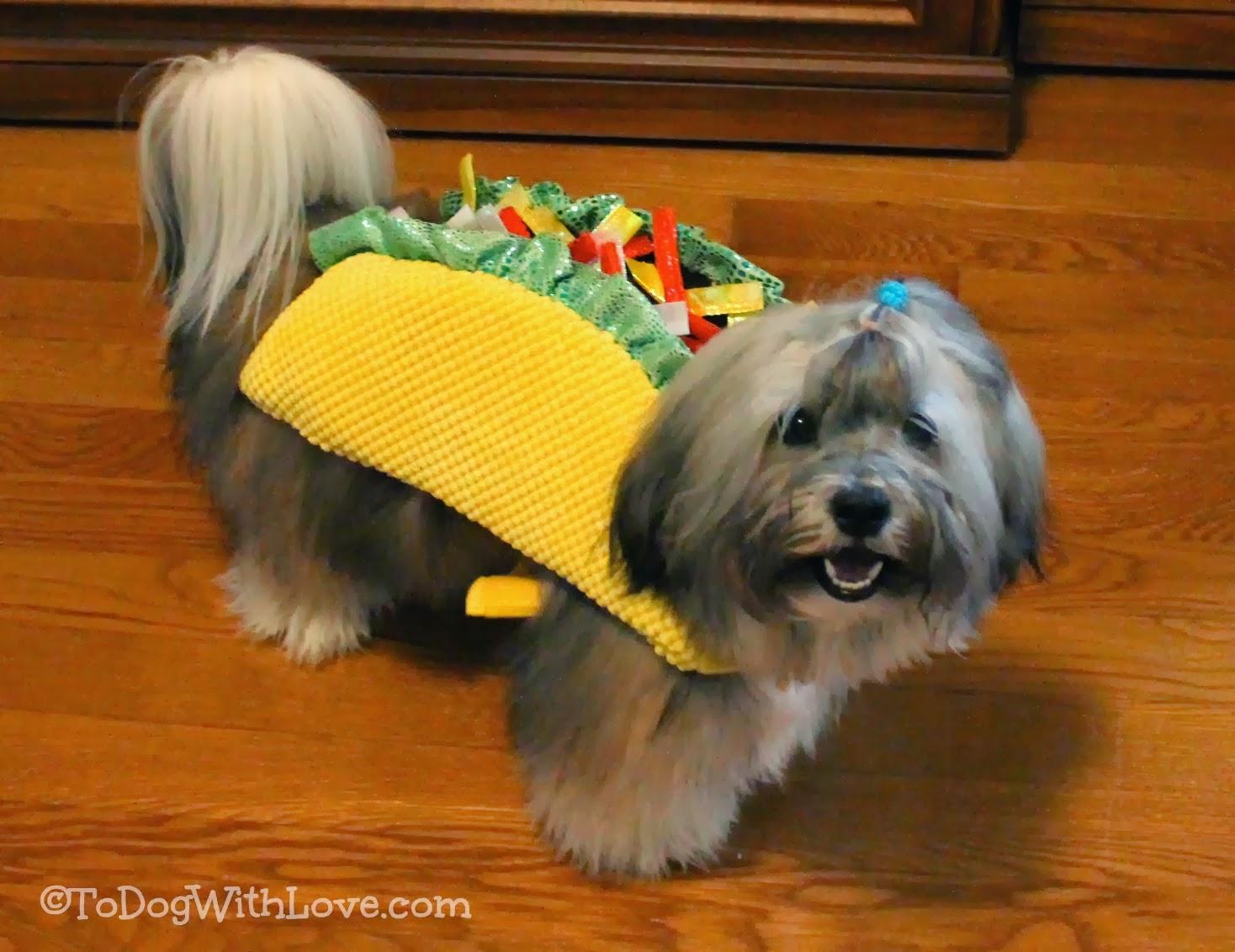 Cool Wallpaper Halloween Puppy - Rocco+Havanese+Petco+Taco+Dog+Halloween+costume  Pic_82177.jpg
