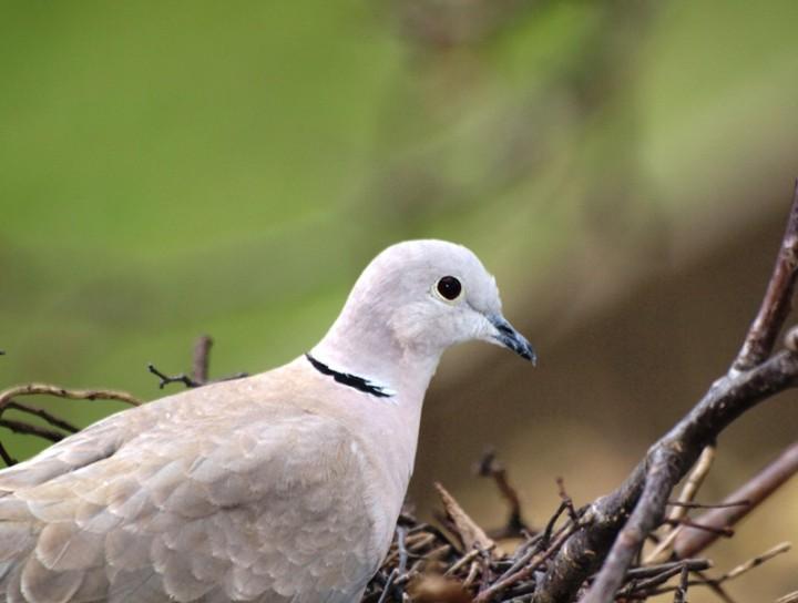 Ptaki Naszych Terenów Foto Atlas Ptaków