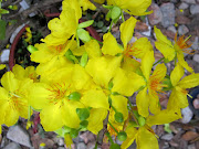 Cập nhật hình ảnh hoa cỏ Tết 2013