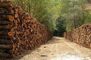 Δήμος Πολυγύρου:Ανακοίνωση για καυσόξυλα