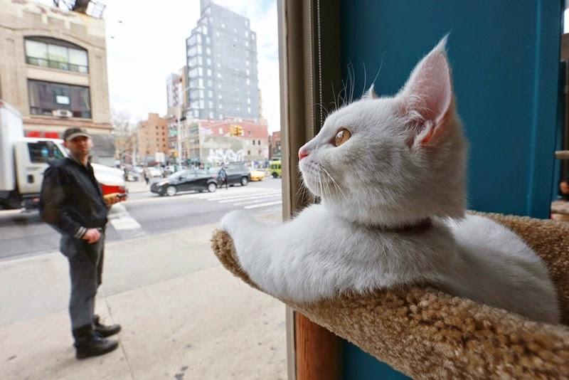Cat cafe in New York
